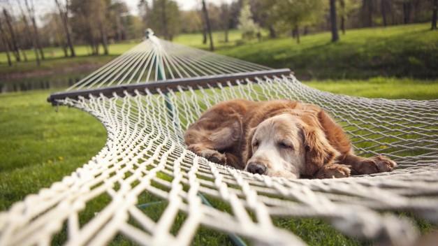 Dog Is Sleeping In A Hammock HD Desktop Background